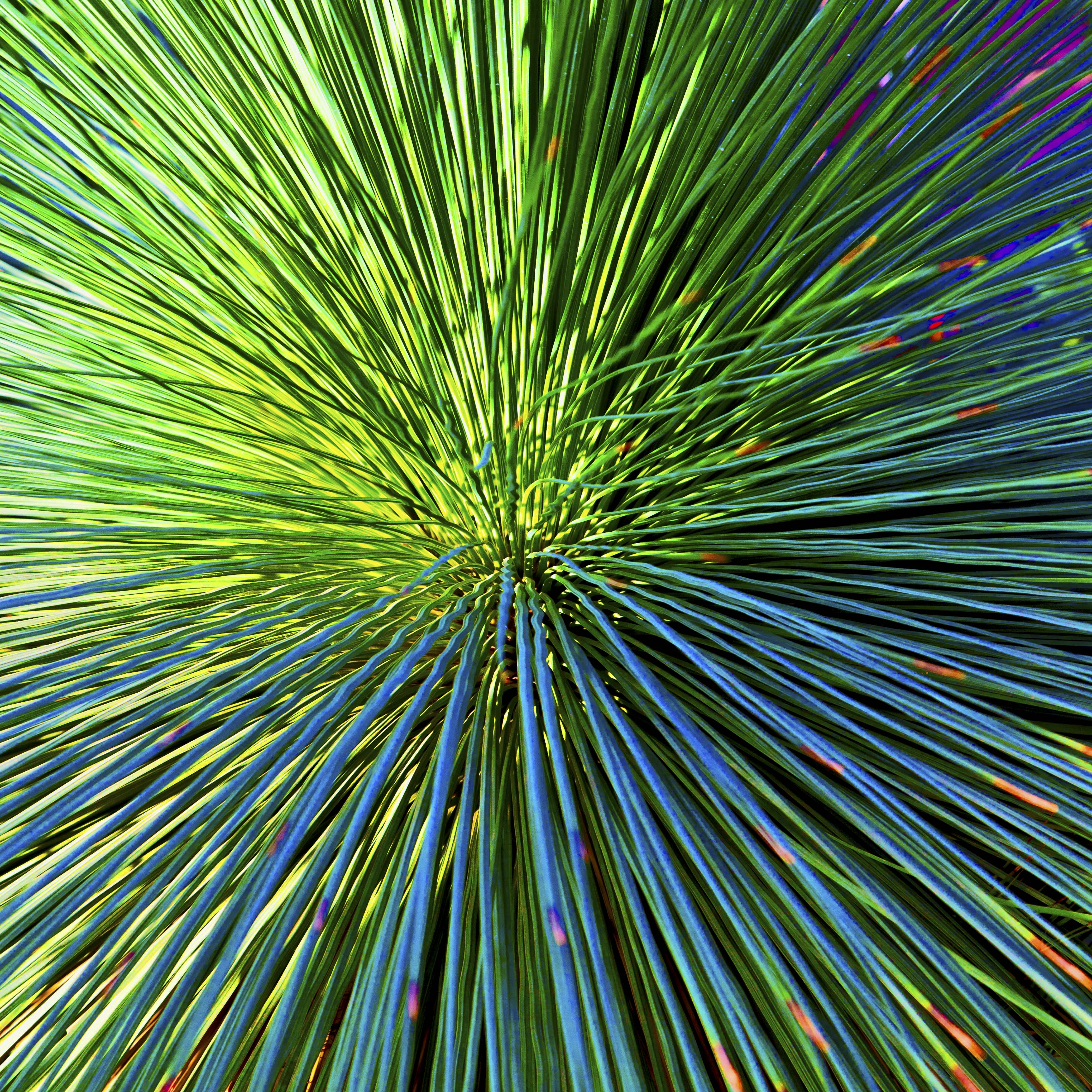 Plant Abstract