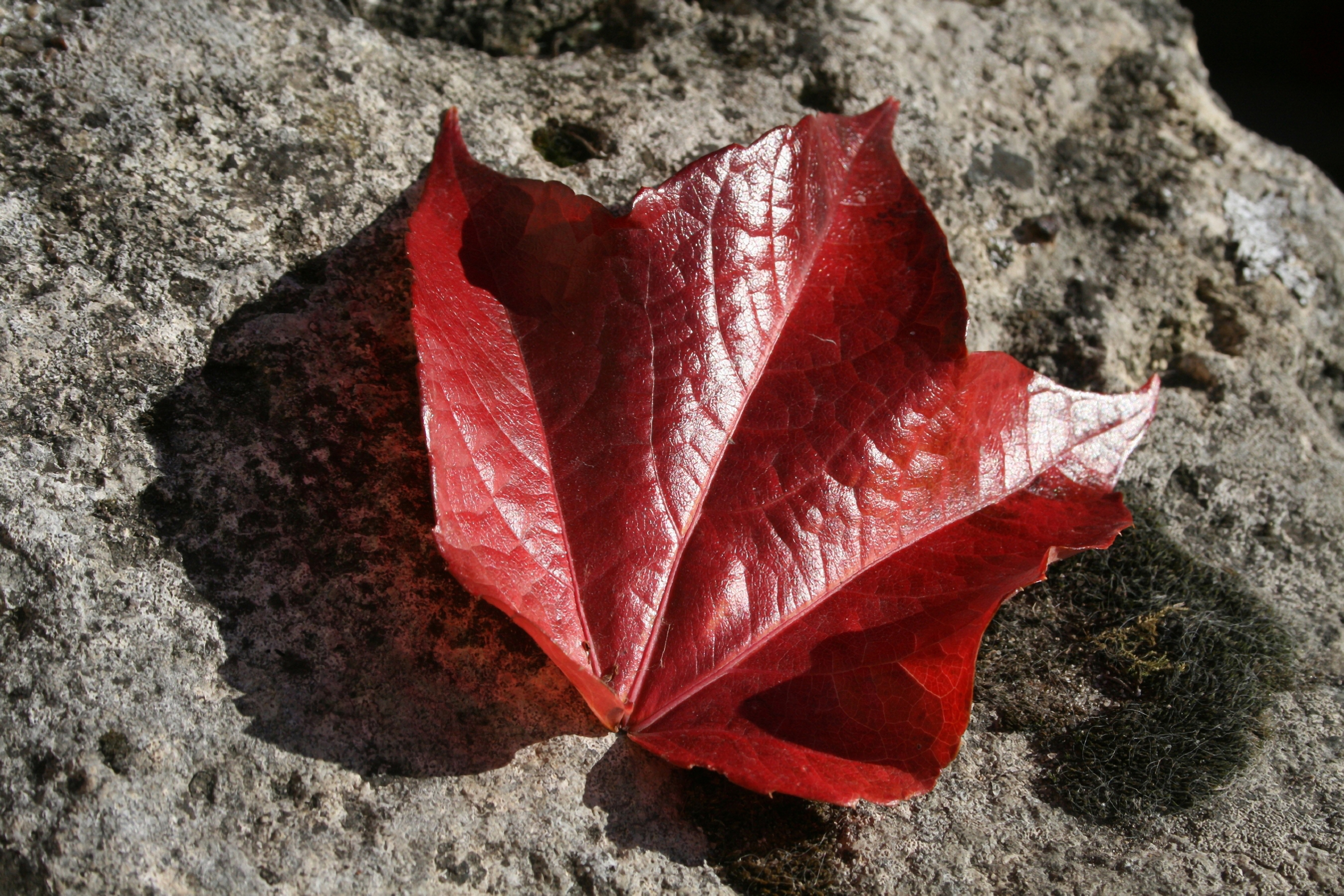 Red Leaf on Rocks in France