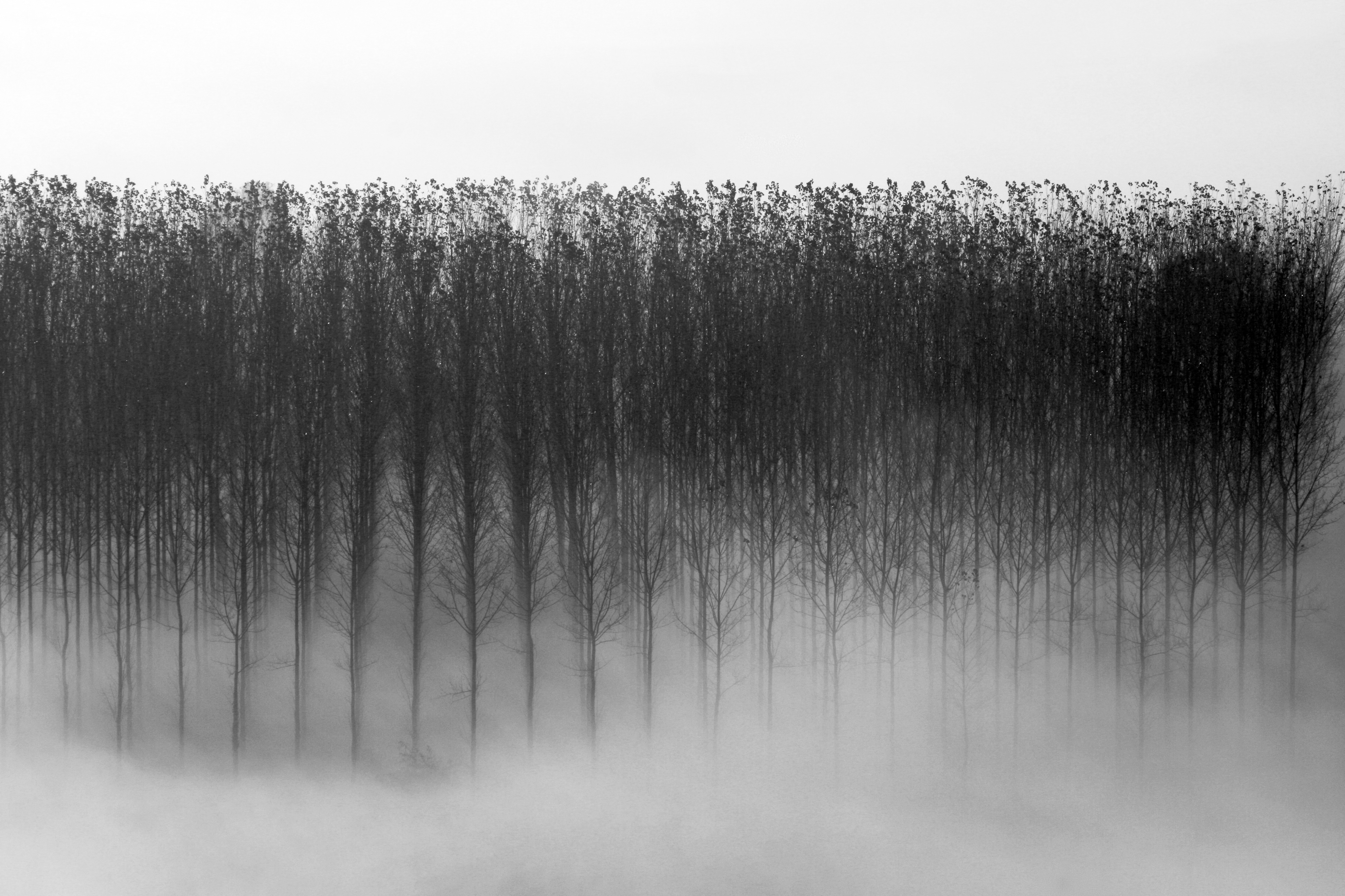 Dawn Mist and Trees, France