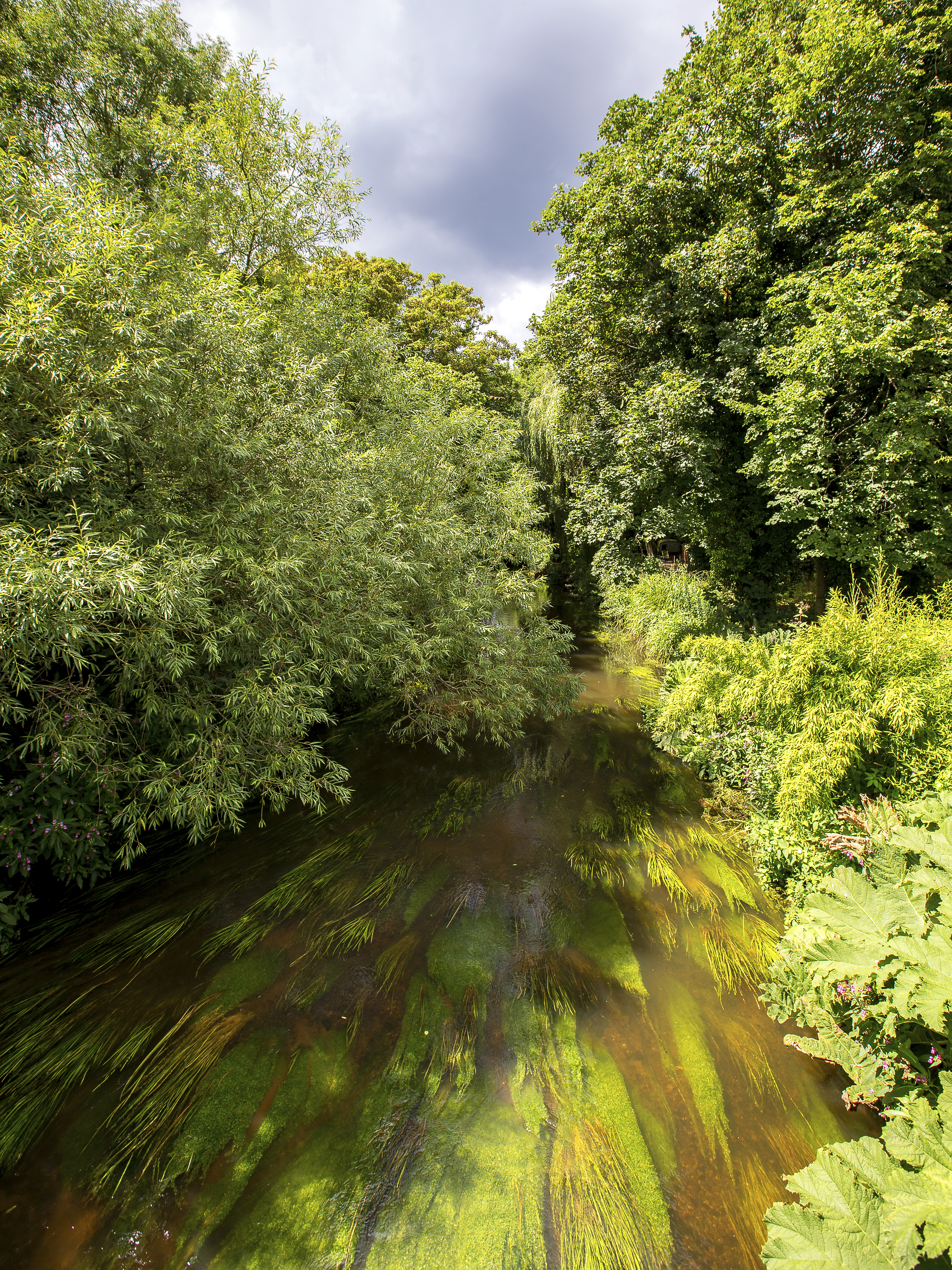 The River Wey, in Tilford, Surrey