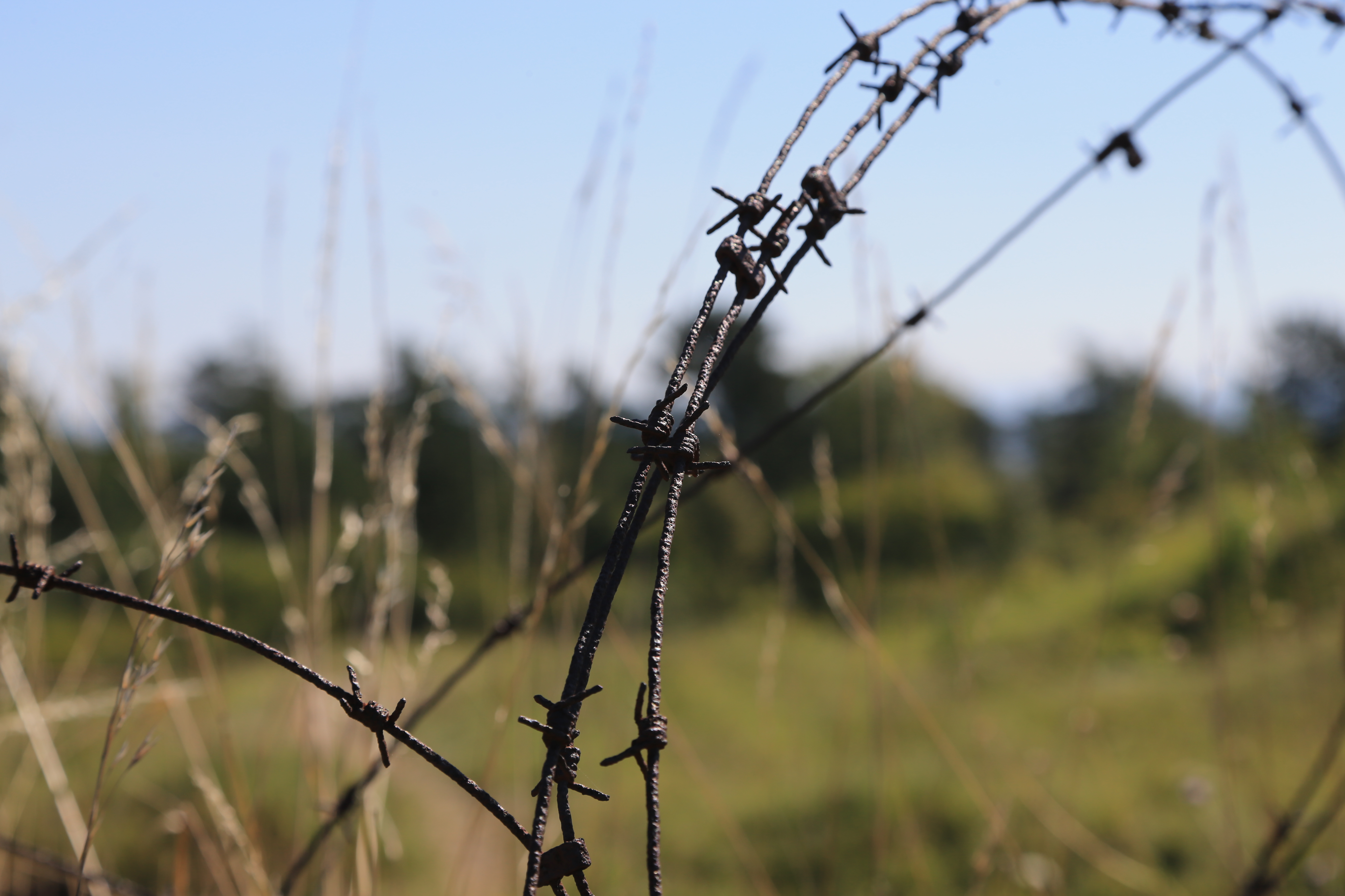Verdun, Barbed Wire