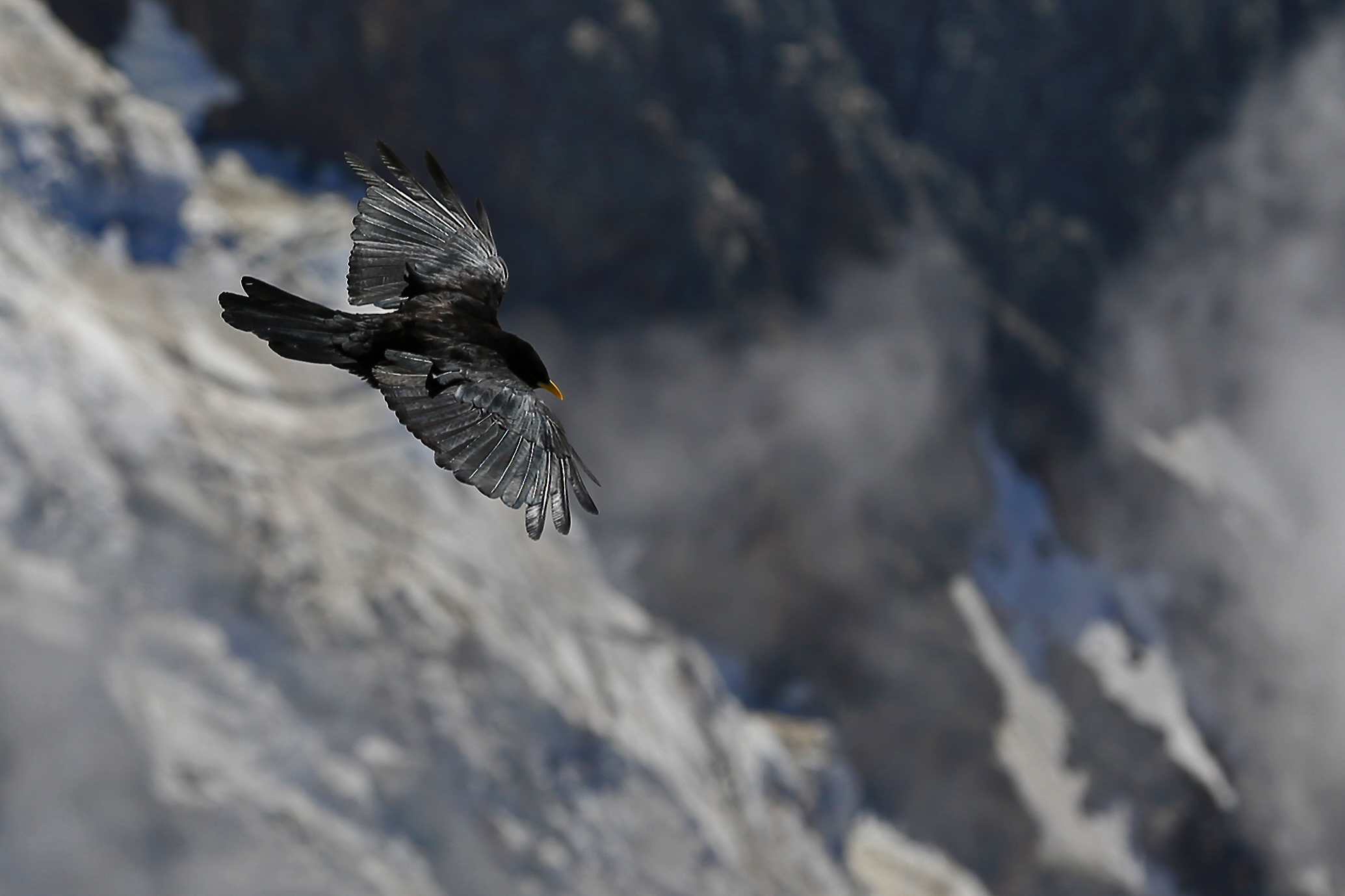 Bird Soaring in the French Alps