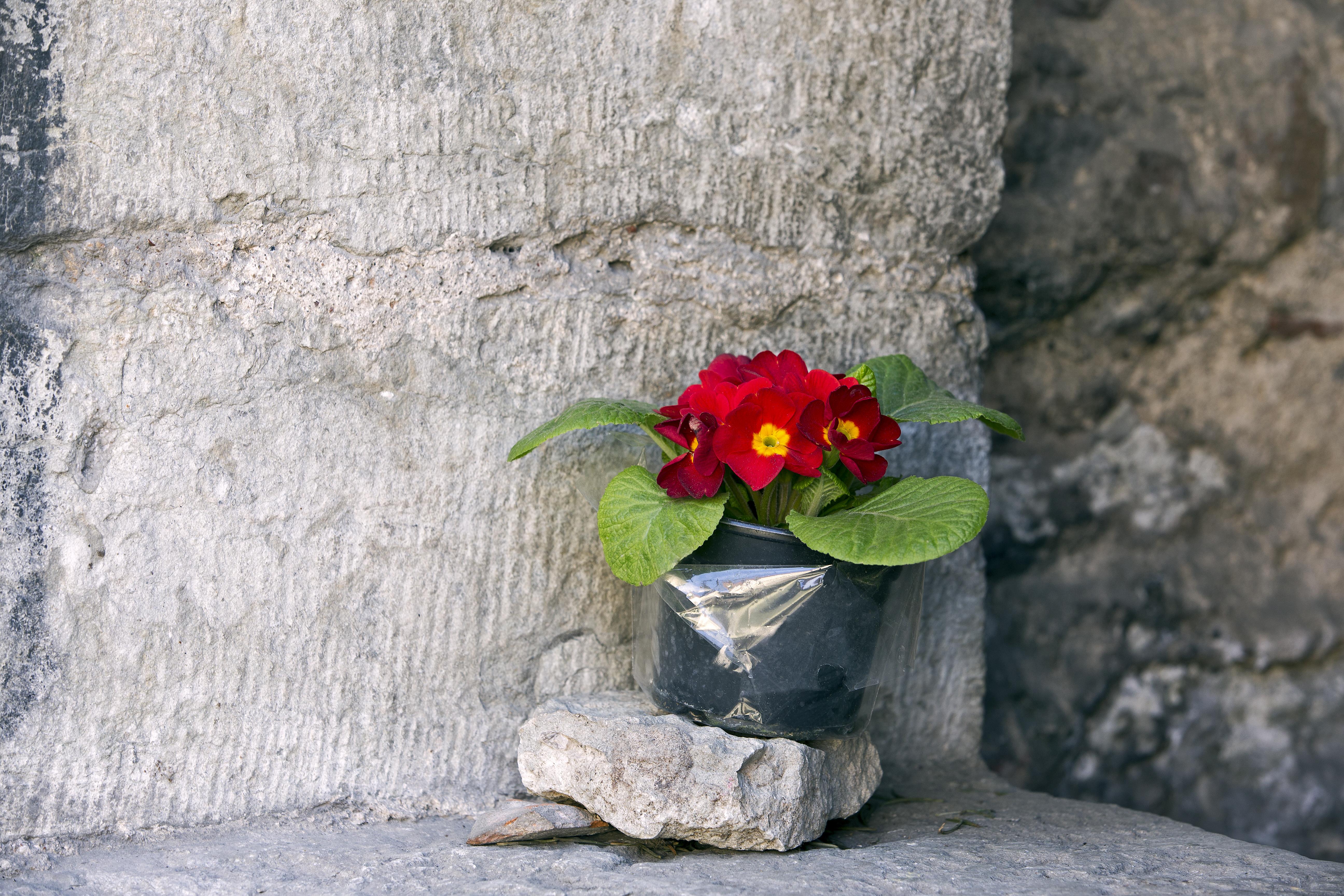 Pot plant in Tallinn, Estonia