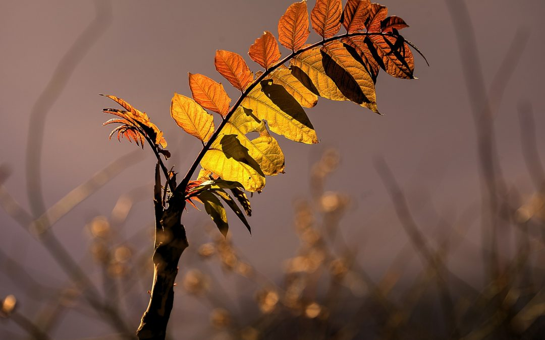 Back-lit Vegetation